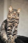Fluffy cat — Stock Photo