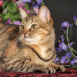 Stock Photo: Tabby kitten