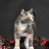 Tabby kitten — Stok fotoğraf