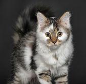Lilla kitty — Stockfoto