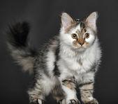 Little kitty — Stock Photo