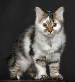 Little kitty — Zdjęcie stockowe