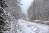 Floresta de inverno — Foto Stock
