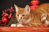 Beautiful young redhead with a white cat on a New Year's background — Stock Photo