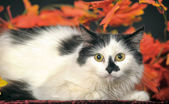 Cat autumn leaves — Stock Photo