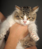 Hand holding cat — Stockfoto
