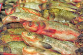 Fresh fish market — Stock Photo