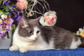 Orlik kot — Zdjęcie stockowe