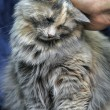 Hand stroking cat — Stockfoto #38788625
