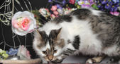 Cat with flowers — Foto Stock