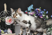 Cat with flowers — Stock Photo