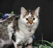 Spotty cat — Stock Photo