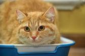Randig katt — Stockfoto