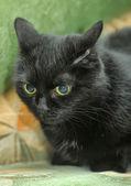 Black cat — Stock Photo