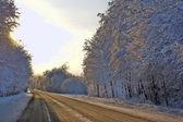Winter road — Стоковое фото