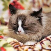 Spotted cat — Stok fotoğraf