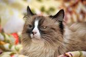 Gevlekte kat — Stockfoto