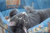Cat in bed — Foto de Stock