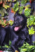 Dog in foliage — Stock Photo