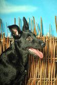 Dog on straw — Stock Photo