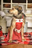 Chef de cachorro na cozinha. — Fotografia Stock