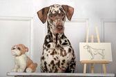 Portrait of a cute little Dalmatian dog in close-up. — Stock Photo