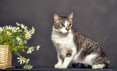 Cute cat and flowers in the studio — Stock Photo