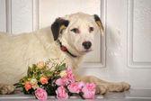 White dog — Stock Photo
