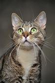 Striped cat — Stock Photo