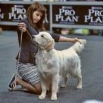 International dog show — Stock Photo #45999329