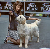 International dog show — Stock Photo