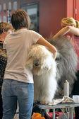 International Dog Show Spring Petersburg - 2014. — Stock Photo