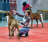 International Dog Show Spring Petersburg - 2014. — Stock Photo