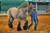 Wystawa rasy koni — Zdjęcie stockowe