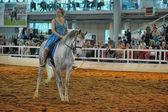 Utställningen rasen hästar — Stockfoto