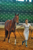 Exhibition breed horses — Stock Photo