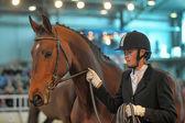 Exhibition breed horses — Stock Photo