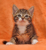 Tabby kitten on orange background — Stock Photo