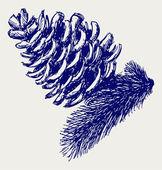 Pine strobile — Stock Photo