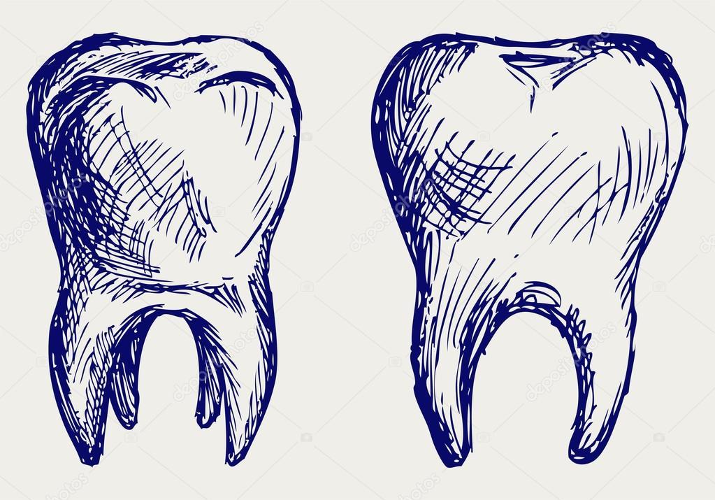 Рисовать зуб для поступления
