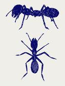Karınca portresi — Stok fotoğraf