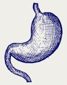 Human stomach — Stock Vector