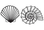 Sea shells — Stock Vector