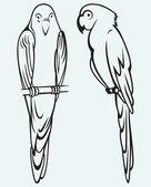 иллюстрация попугаи — Cтоковый вектор