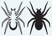 Tarantula spider — Stock Vector