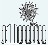Sunflower and fence — Stock Vector