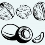 Coconut and walnut — Stock Vector #40870517