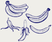 Bunch of bananas, peeled banana and banana peel — Stock Vector