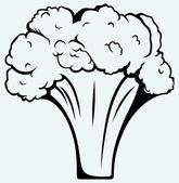 Brócoli fresco — Vector de stock