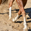 Stock Photo: Legs of horse doing dressage